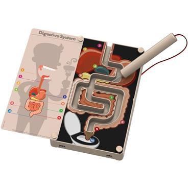 Digestive System Buzz Wire