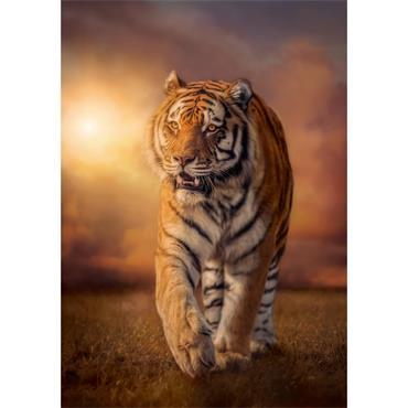 HQC 1500pc Puzzle - Tiger