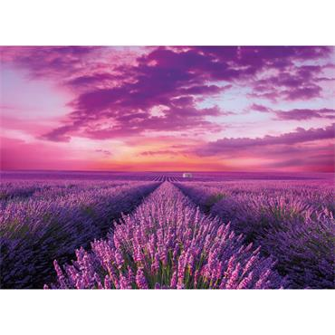 HQC 1000pc Puzzle - Lavender Field