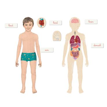 Clementoni Montessori - Human Body