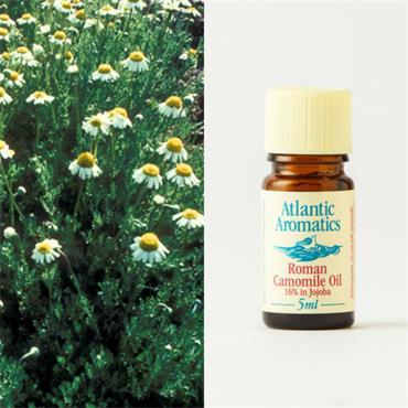 Atlantic Aromatics Camomile Oil 5ml