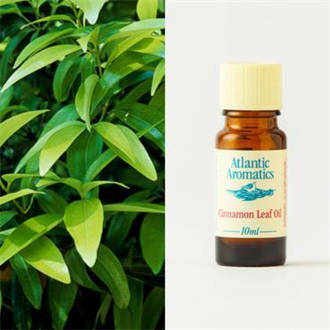 Atlantic Aromatics Cinnamon Leaf 10ml