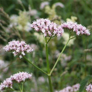 Irish Botanica Peace & Calm 200ml