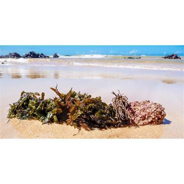 Mind & Body Seaweed Bath Bag 225g
