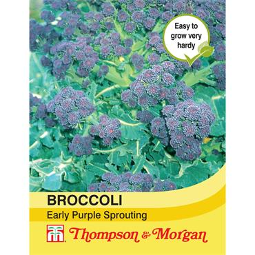 BROCCOLI EARLY PURPLE SPROUTING