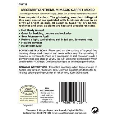 MESEMBRYANTHEMUM MAGIC CARPET MIXED