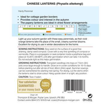 CHINESE LANTERNS (PHYSALIS GIGANTEA)