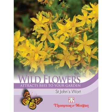 WILD FLOWER ST JOHN'S WORT
