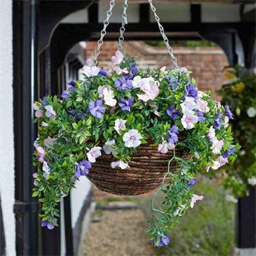 Easy Hanging Basket - Petunia | 260654