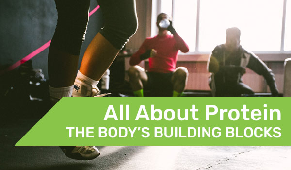 All about protein the body's building blocks