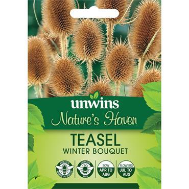 Unwins Nh Teasel Winter Bouquet Seeds