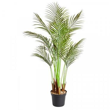 Smart Garden 124cm Phoenix Palm