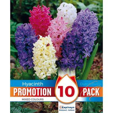Kapiteyn Hyacinthus Mixed Colours Bulbs Spring Flowering 10pk