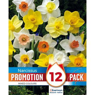 Kapiteyn Narcissus Mixed Colours Bulbs Spring Flowering 12pk