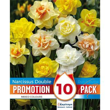 Kapiteyn Narcissus Double Mixed Colours Bulbs Spring Flowering 10pk