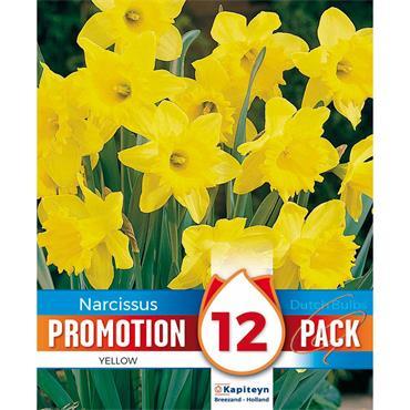 Kapiteyn Narcissus Yellow Bulbs Spring Flowering 12Pk