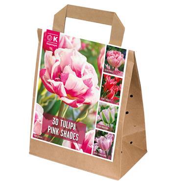 Kapiteyn Tulip Pink Shades Bulbs Spring Flowering 30pk