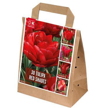 Kapiteyn Tulip Red Shades Bulbs Spring Flowering 30pk