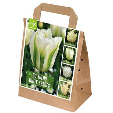 Kapiteyn Tulip White Shades Bulbs Spring Flowering 30pk