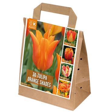 Kapiteyn Tulip Orange Shades Bulbs Spring Flowering 30pk