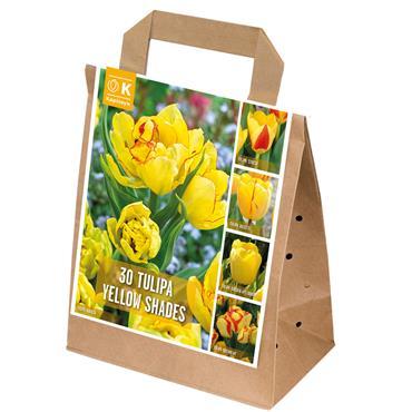 Kapiteyn Tulip Yellow Shades Bulbs Spring Flowering 30pk
