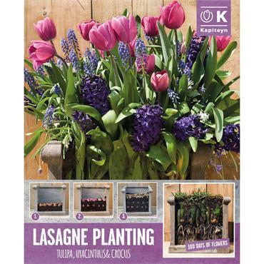Kapiteyn Patio Lasagne Pink-Blue Shades Bulbs Spring Flowering 40pk