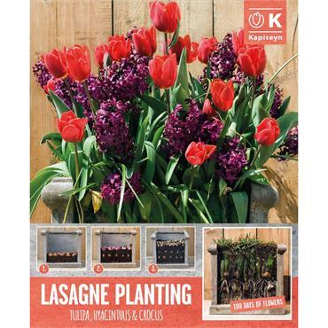 Kapiteyn Patio Lasagne Red-Purple Shades Bulbs Spring Flowering 40pk