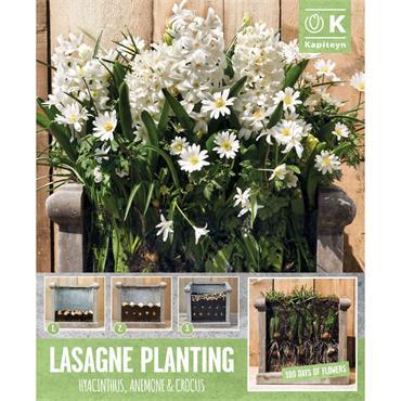 Kapiteyn Patio Lasagne White Bulbs Spring Flowering 40pk