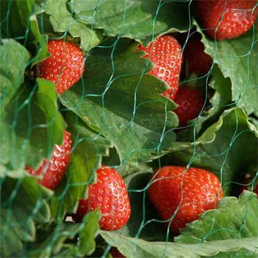 Smart Garden Garden Netting Green (15mm) 2 x 10m
