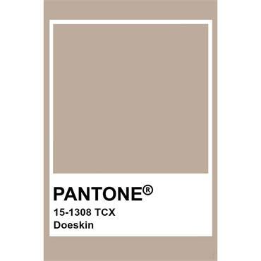 Pantone Sample Pot Doe Skin