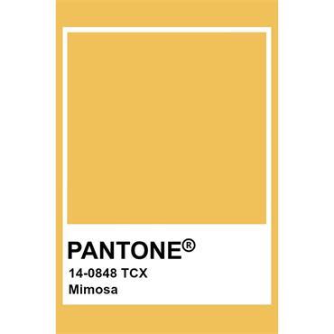 Pantone Sample Pot Mimosa