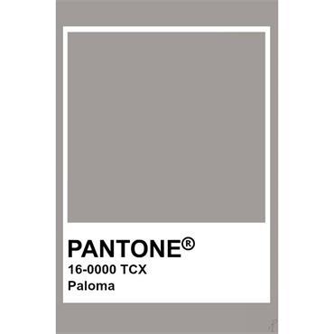 Pantone Sample Pot Paloma
