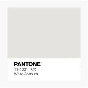 Pantone Sample Pot Snow White