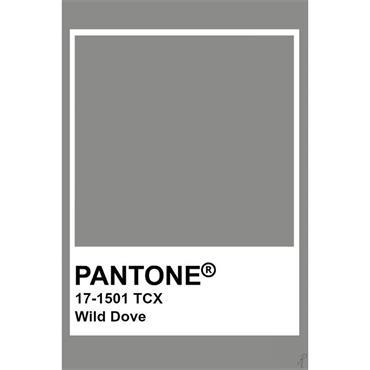 Pantone Sample Pot Wild Dove