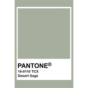 Pantone Sample Pot Desert Sage