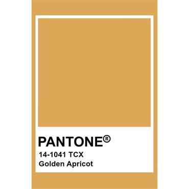 Pantone Sample Pot Golden Apricot