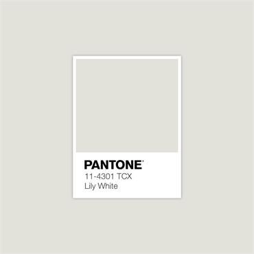 Pantone Sample Pot Lily White