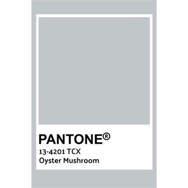 Pantone Sample Pot Oyster Mushroom