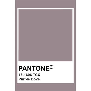 Pantone Sample Pot Purple Dove
