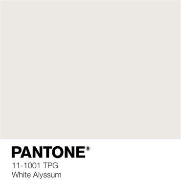 Pantone Sample Pot White Alyssum