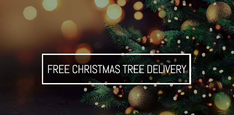 Stakelums Christmas Tree Sale - FREE Delivery Nationwide
