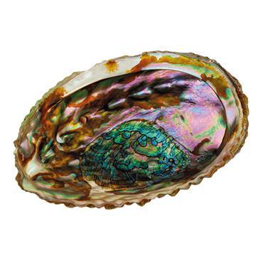 Croll & Denecke Abalone Shell Soap Dish