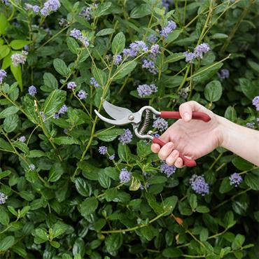 KS Garden Life Bypass Secateurs
