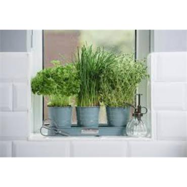 KS DFV Trio of Herb Pots