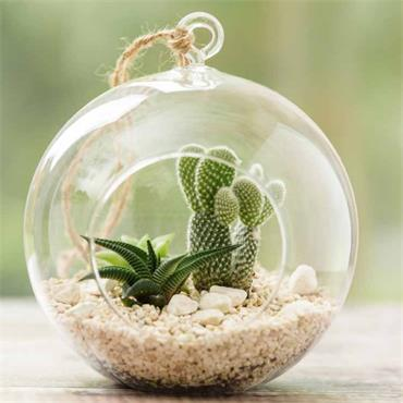 Gardman Large Glass Globe Terrarium