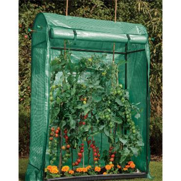 Premium Tomato Growhouse