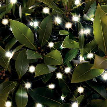 50 Solar LED String Lights - Warm White