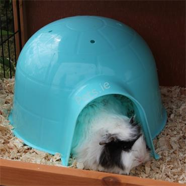 Guinea Pig Hide Out