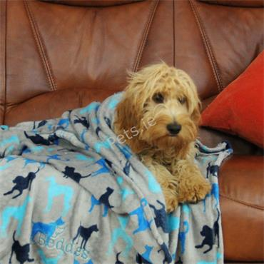 Beddies Supersoft Fleece Blanket - Grey/Blue