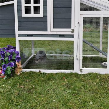 Amy Rabbit And Guinea Pig Hutch
